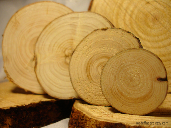 tree slices
